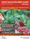 GBBC flyer
