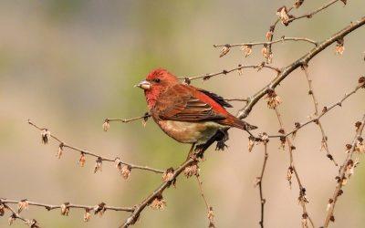 Where are the birding gaps? Part II