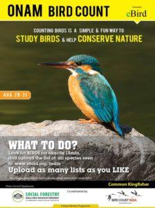 OCB-2015-Kingfisher