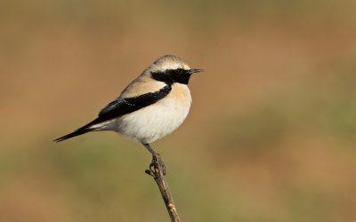 Dry-land Birds Wing it to 'Wet' Kerala
