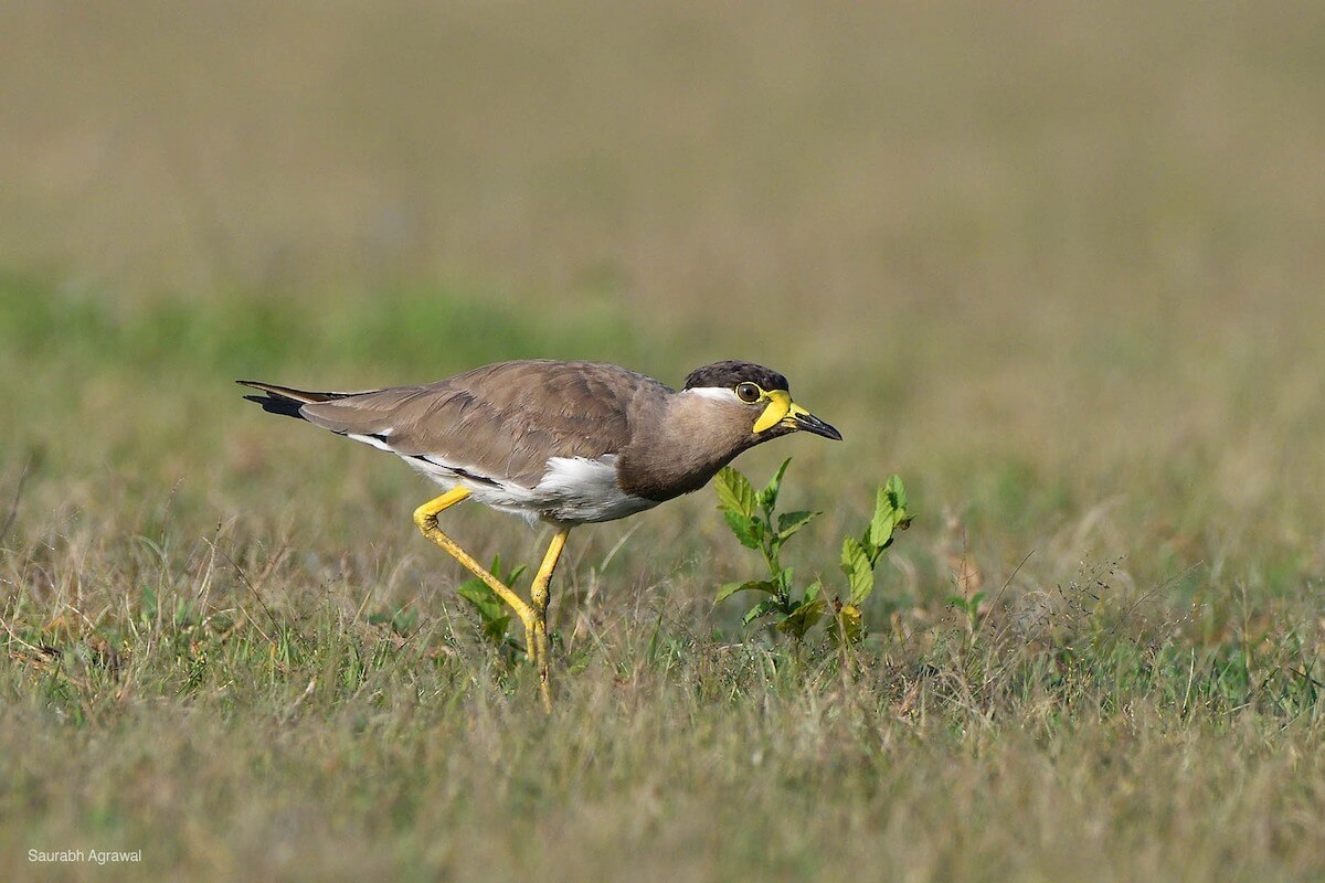 September 2017 eBirders of the month