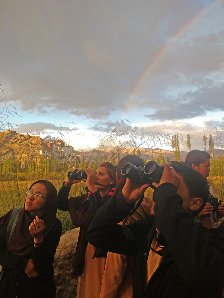 A small flock of Mountain Chiffchaffs under scrutiny as a rainbow appears in the background