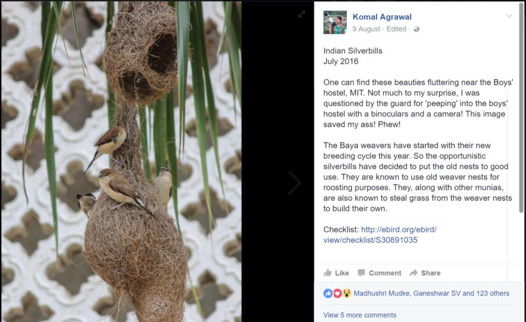 Patch Birding on Facebook