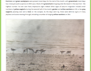 Patch Birding Blog