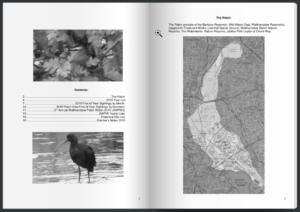 Patch Birding Report