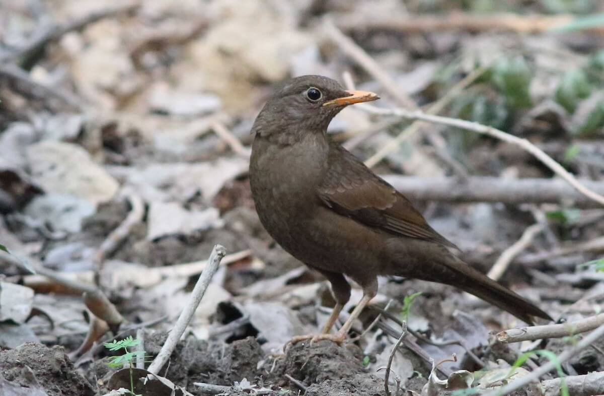 March 2017 eBirders of the Month