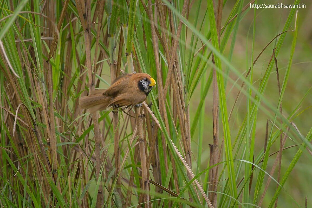 Birder Profile – Chetna Sharma
