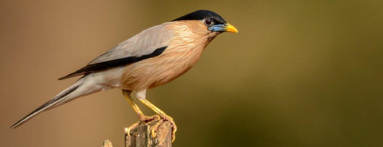 Using eBird through the India portal – Bird Count India