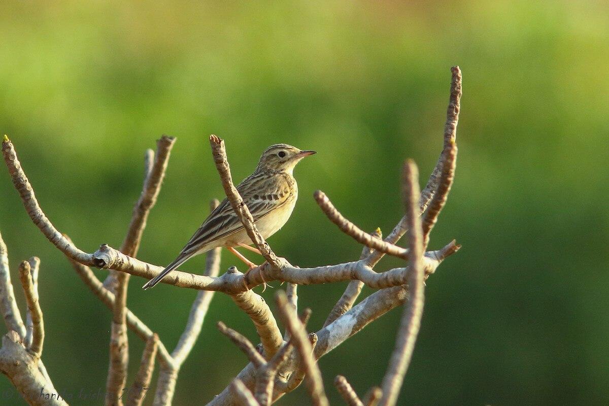 Birder Profile – Manjeet Kaur Bal