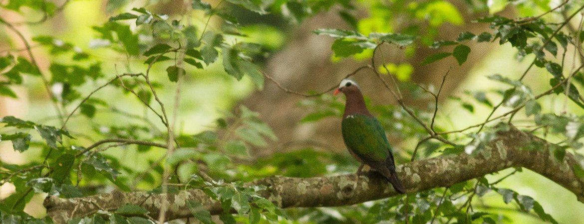One Million Bird Records From Tamil Nadu Bird Count India