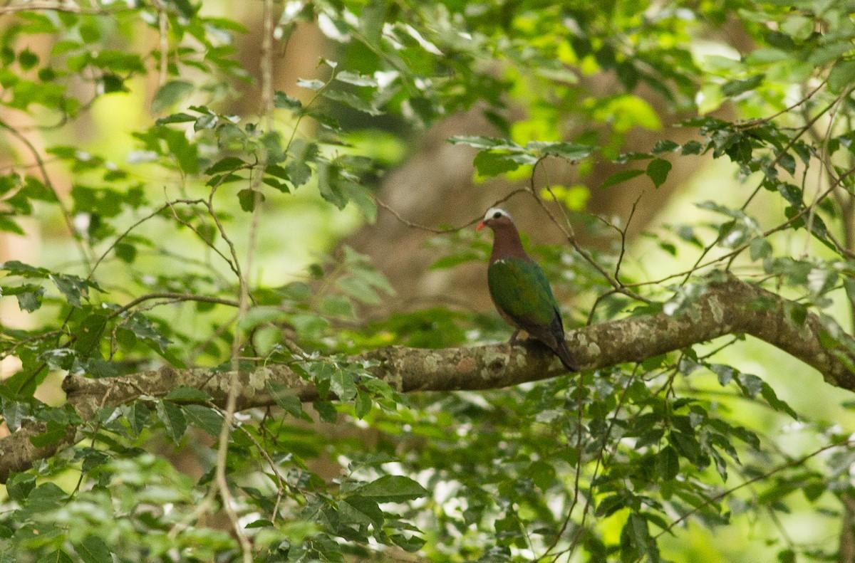 One million bird records from Tamil Nadu