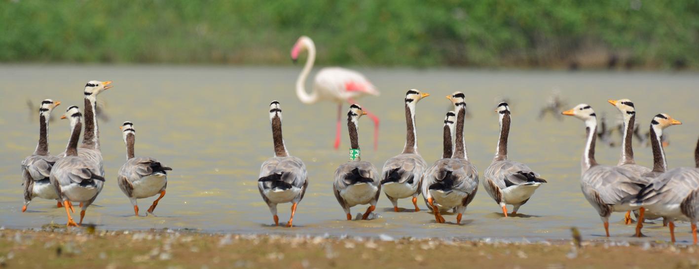 Pongal Bird Count 2018