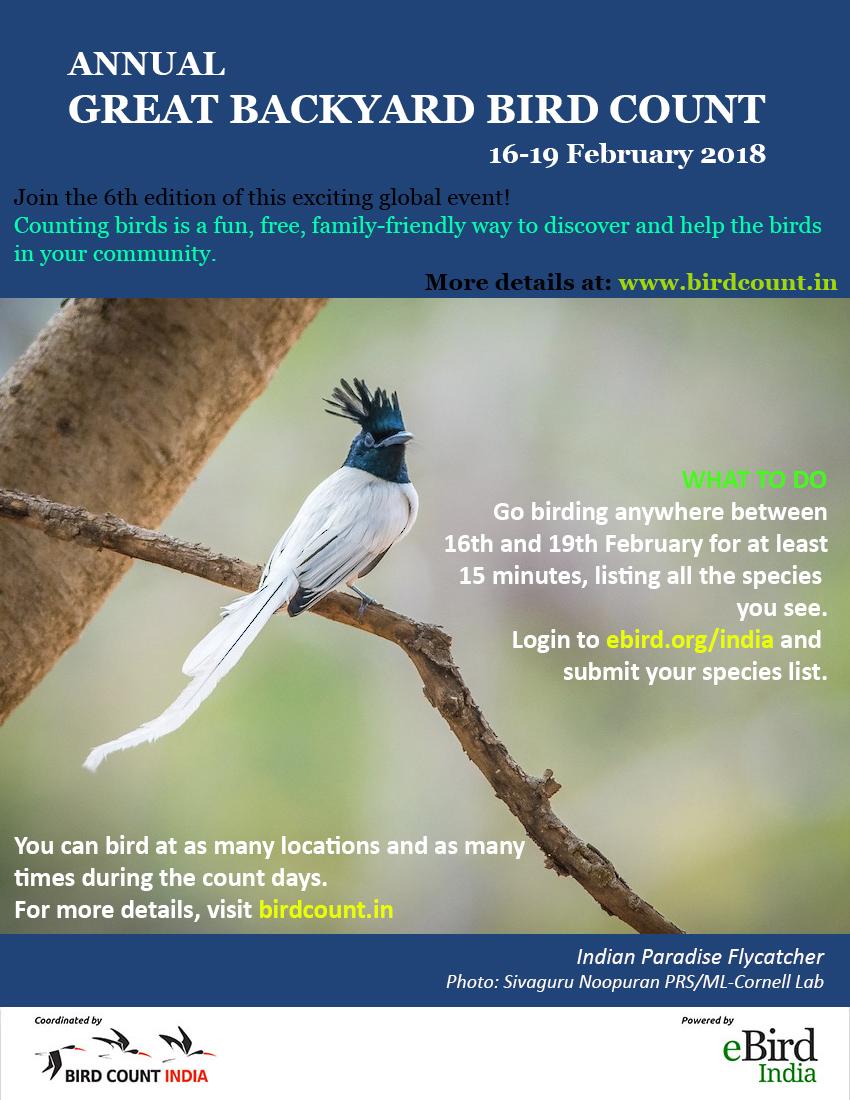 Great Backyard Bird Count & Campus Bird Count 2018