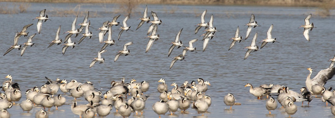 Birder Profile – Vijaya Lakshmi Rao
