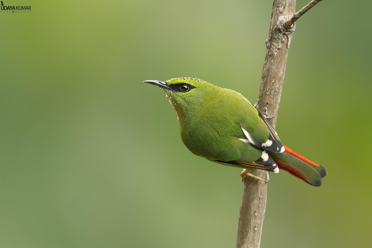 Birder Profile: N Mahathi