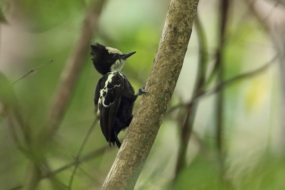 Birder Profile – Garima Bhatia