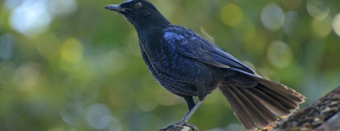 Getting Started 5: Tuning in to bird sounds – Bird Count India