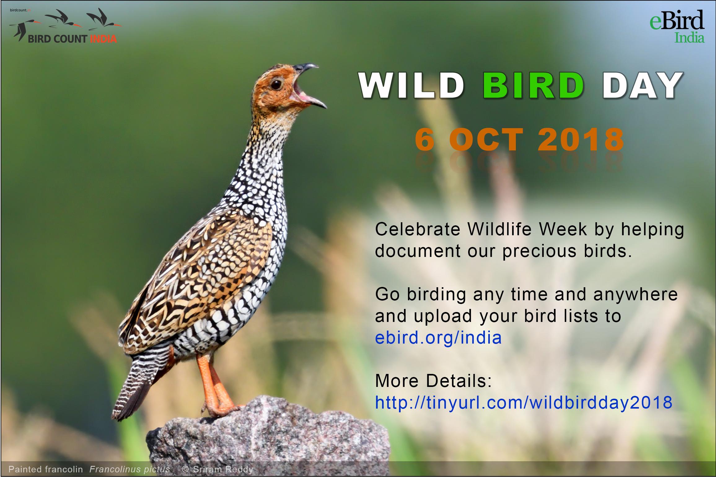 Wild Bird Day 2018 – Bird Count India