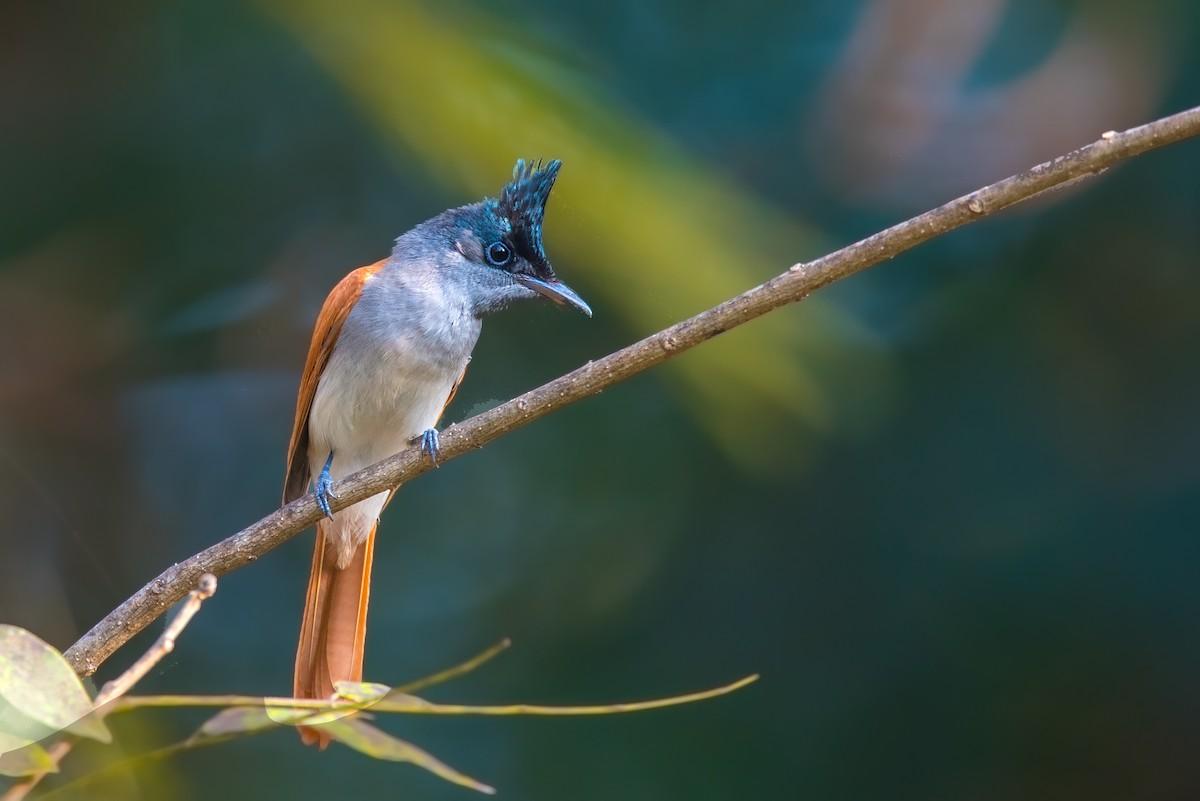 Birder Profile: Subhadra Devi – Bird Count India