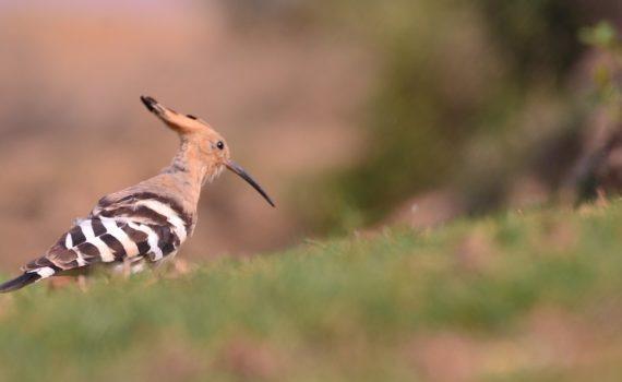 Bird Count India – Bird Count India