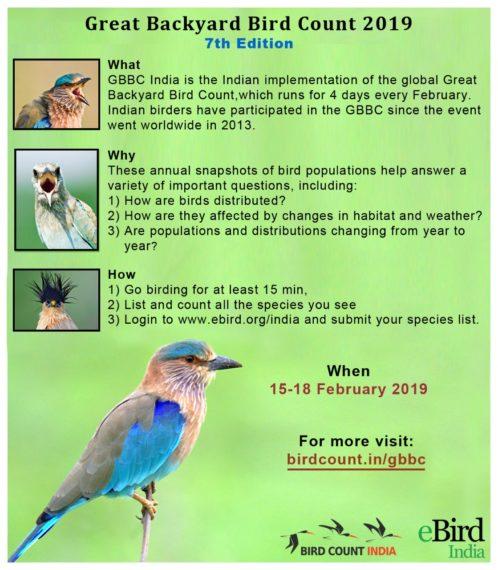 Great Backyard Bird Count – Bird Count India