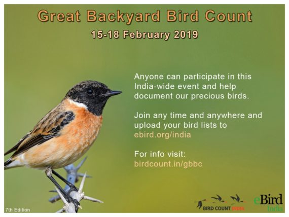 Great Backyard Bird Count 2019 – Page 3 – Bird Count India