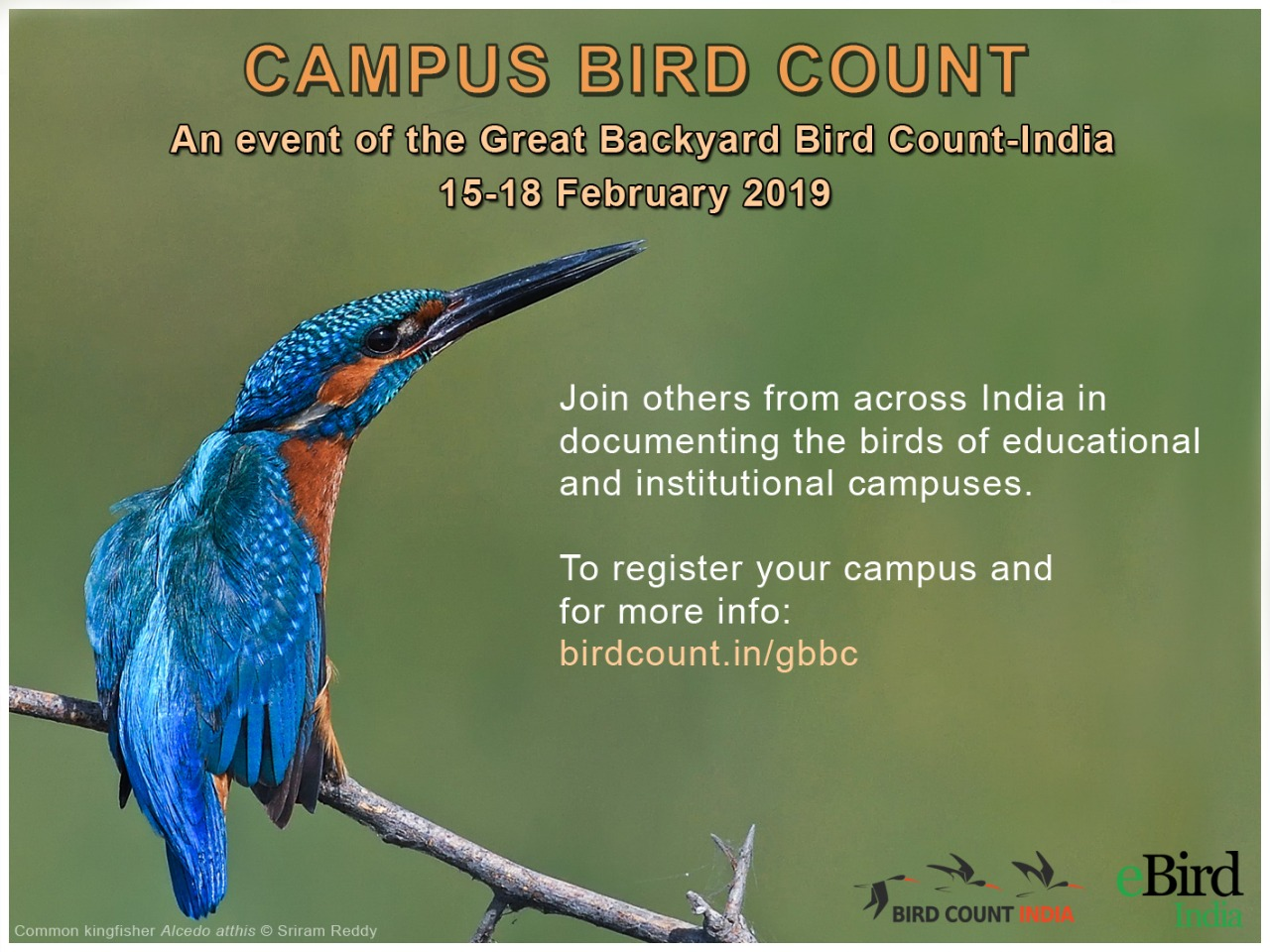 Campus Bird Count 2019 – Bird Count India