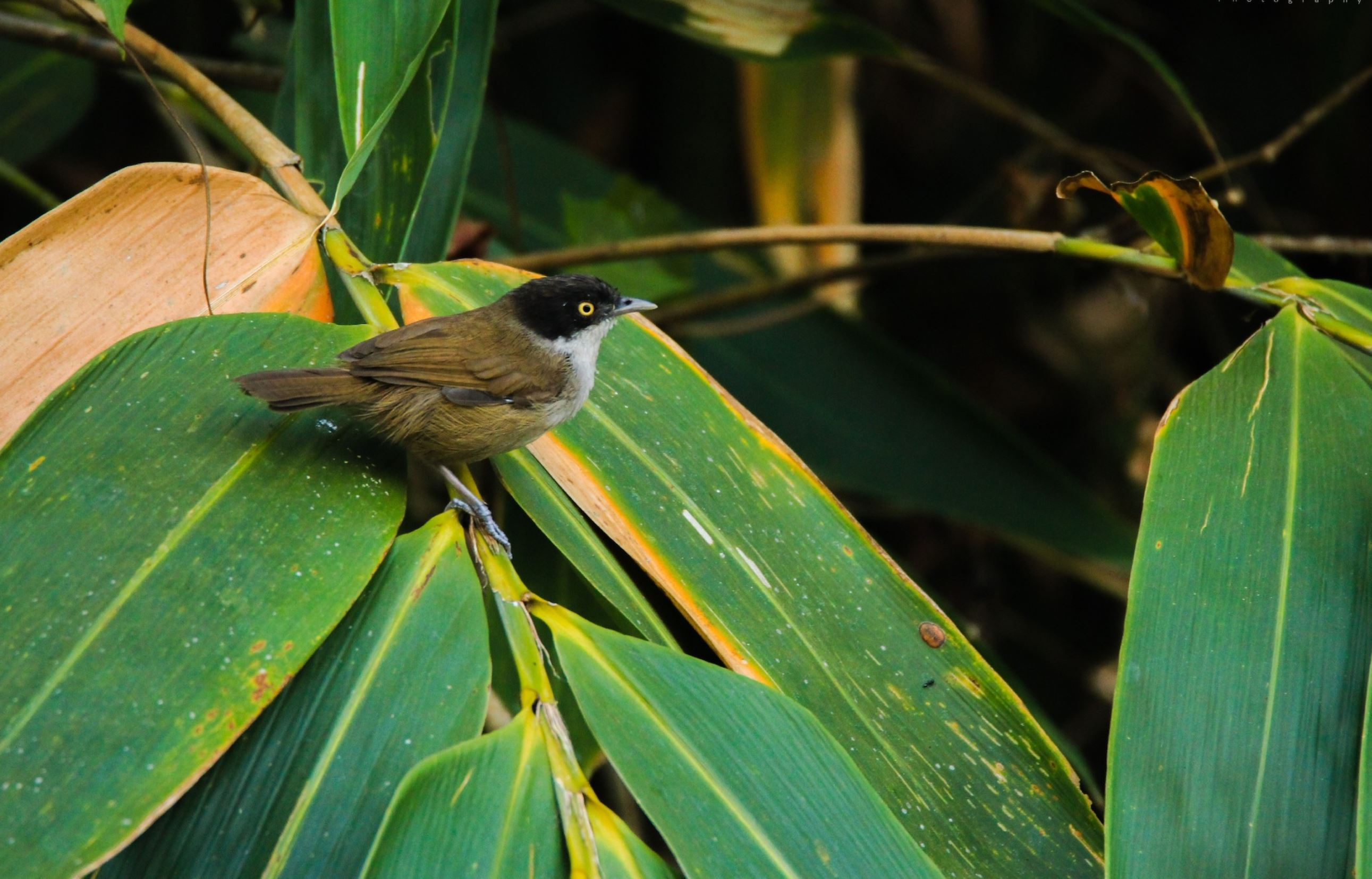 Endemic Bird Day 2019- Crossword Puzzle