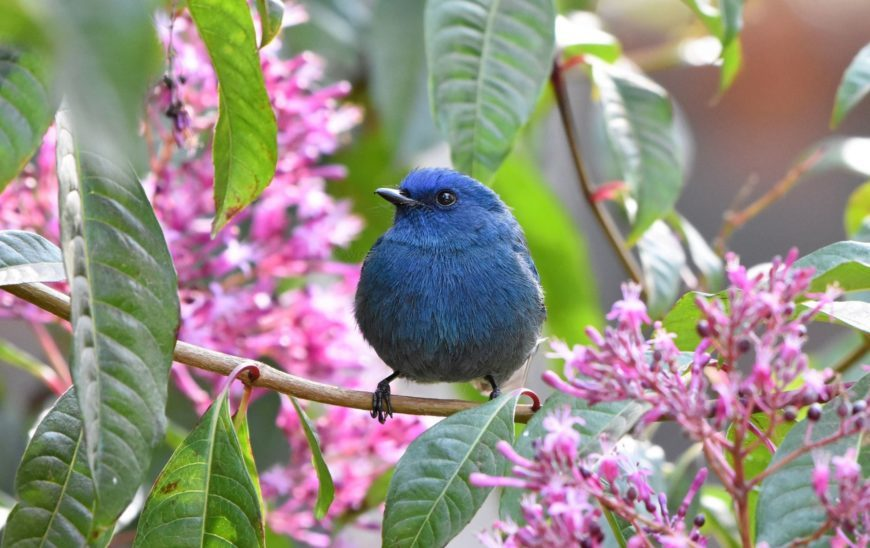 Endemic Bird Day 2019- Quiz 2