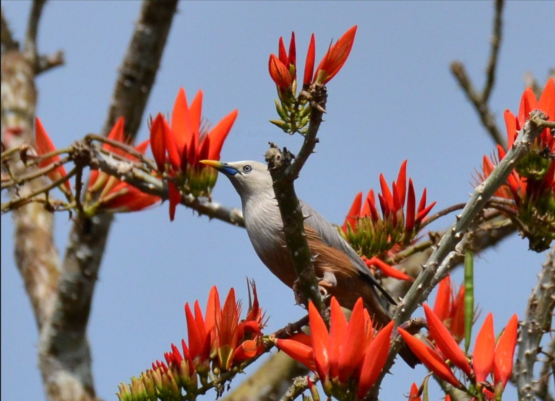 Endemic Bird Day 2019: Quiz 1