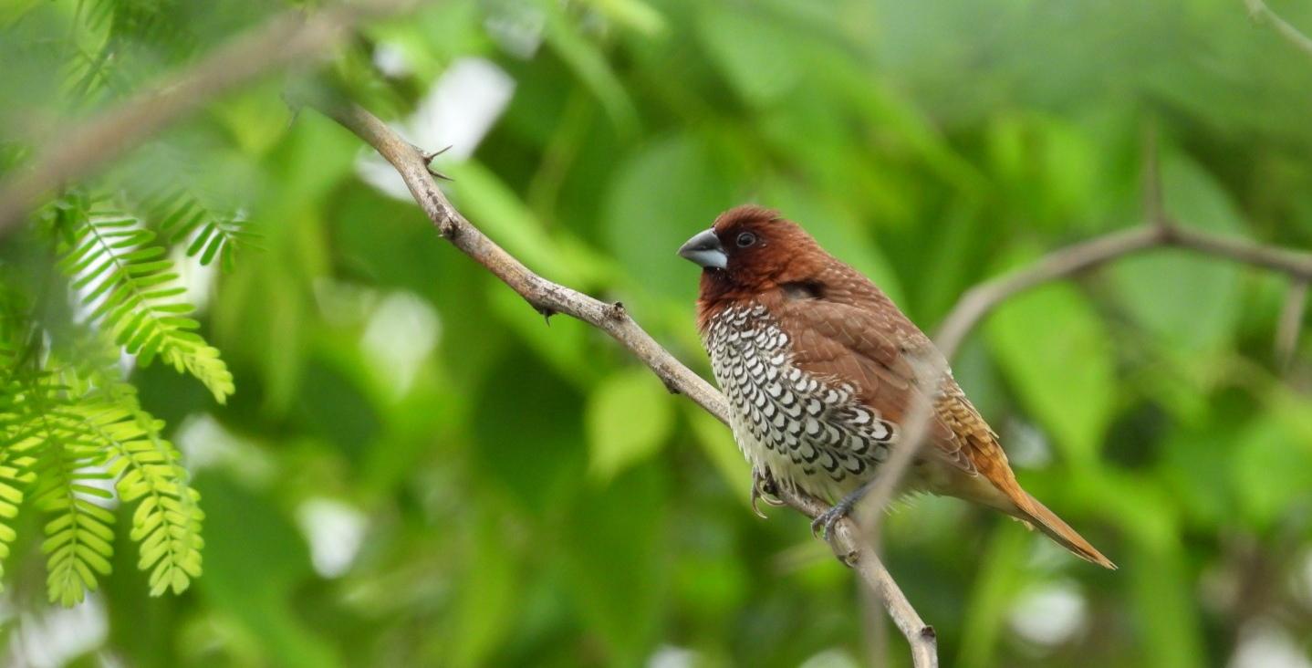June 2019 eBirders of the month   Bird Count India