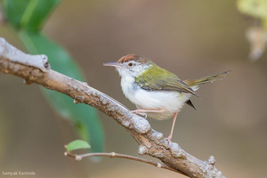 Birder Profile: Dhruba J Saikia