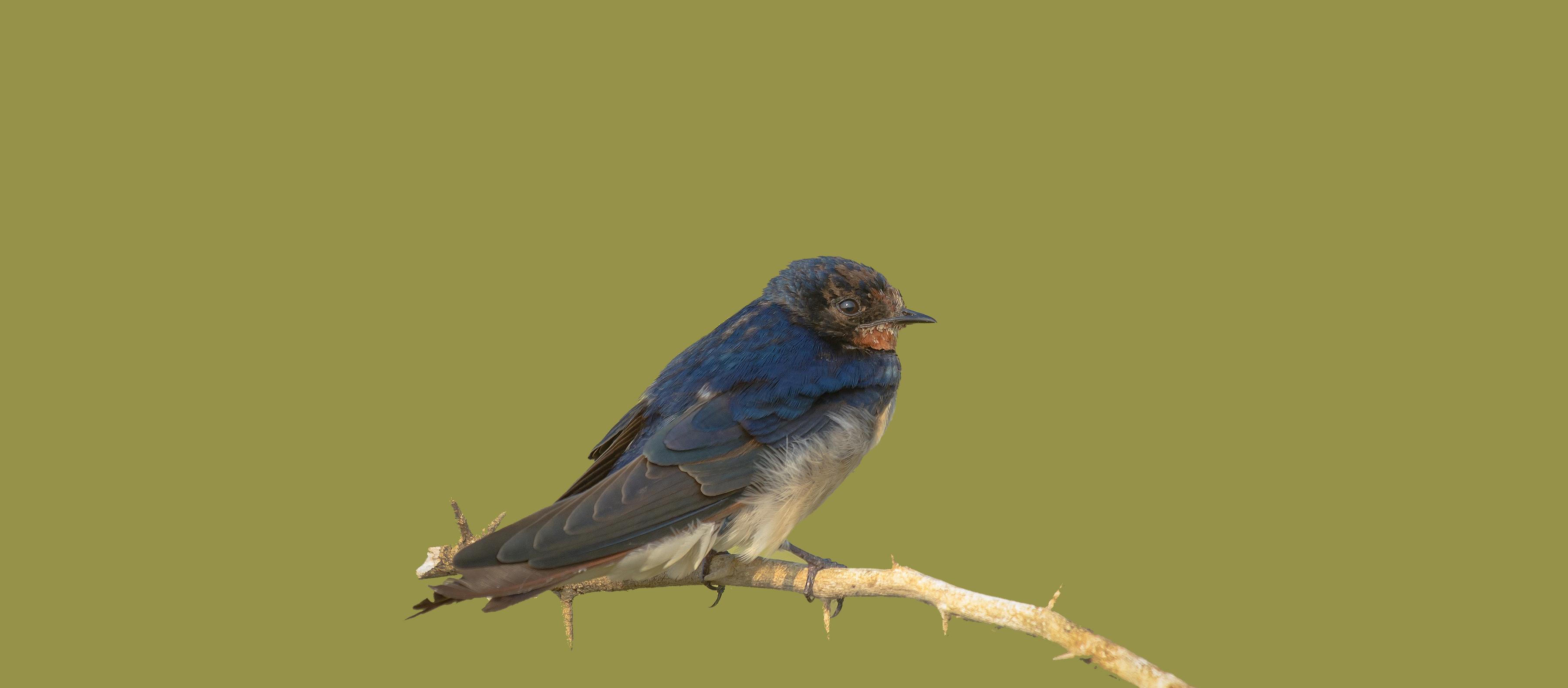 Birder Profile: Selvaraj Rangasamy