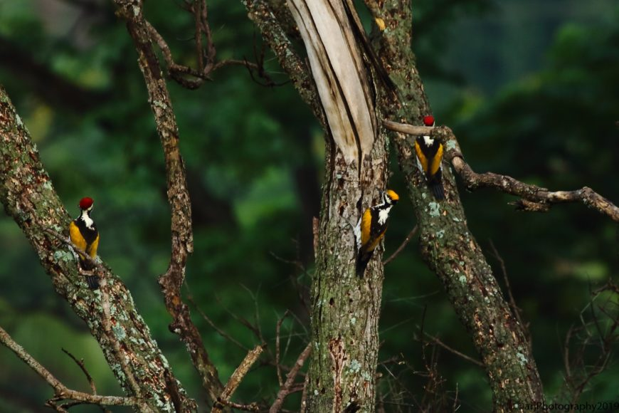 Patch Birding Profile- Rahul Singh