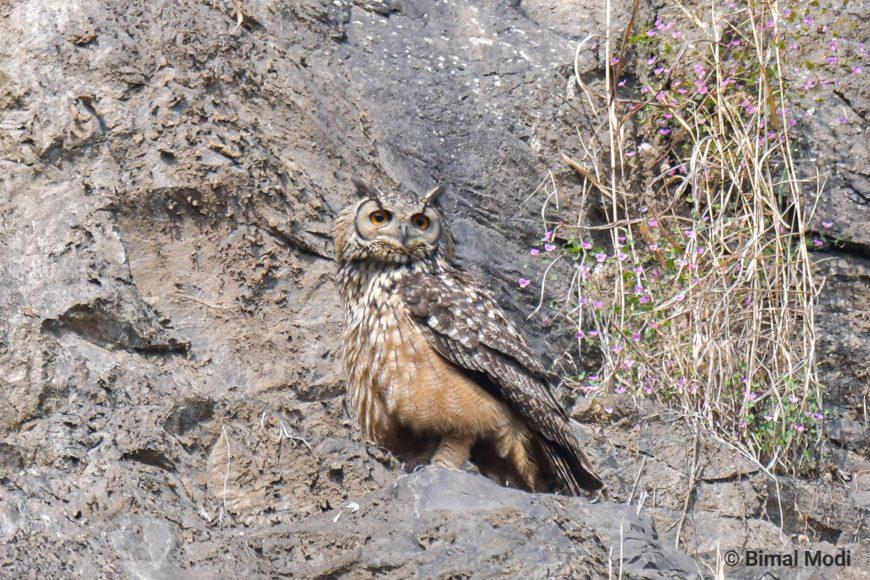 Birder Profile: Avinash Sharma