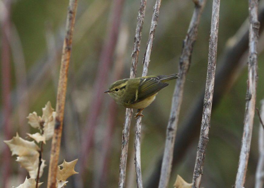 Birder Profile: Sandhya Lenka