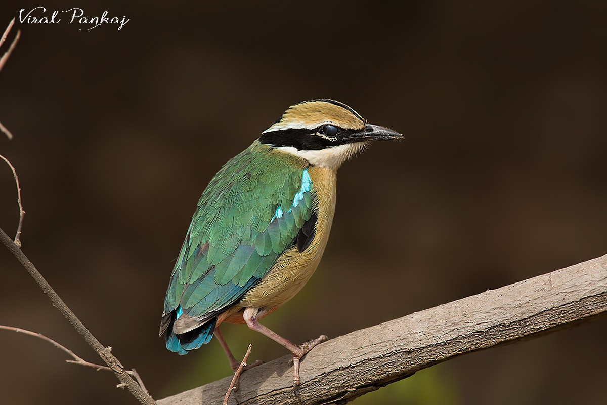 Birder Profile: Kalpana Jayaraman