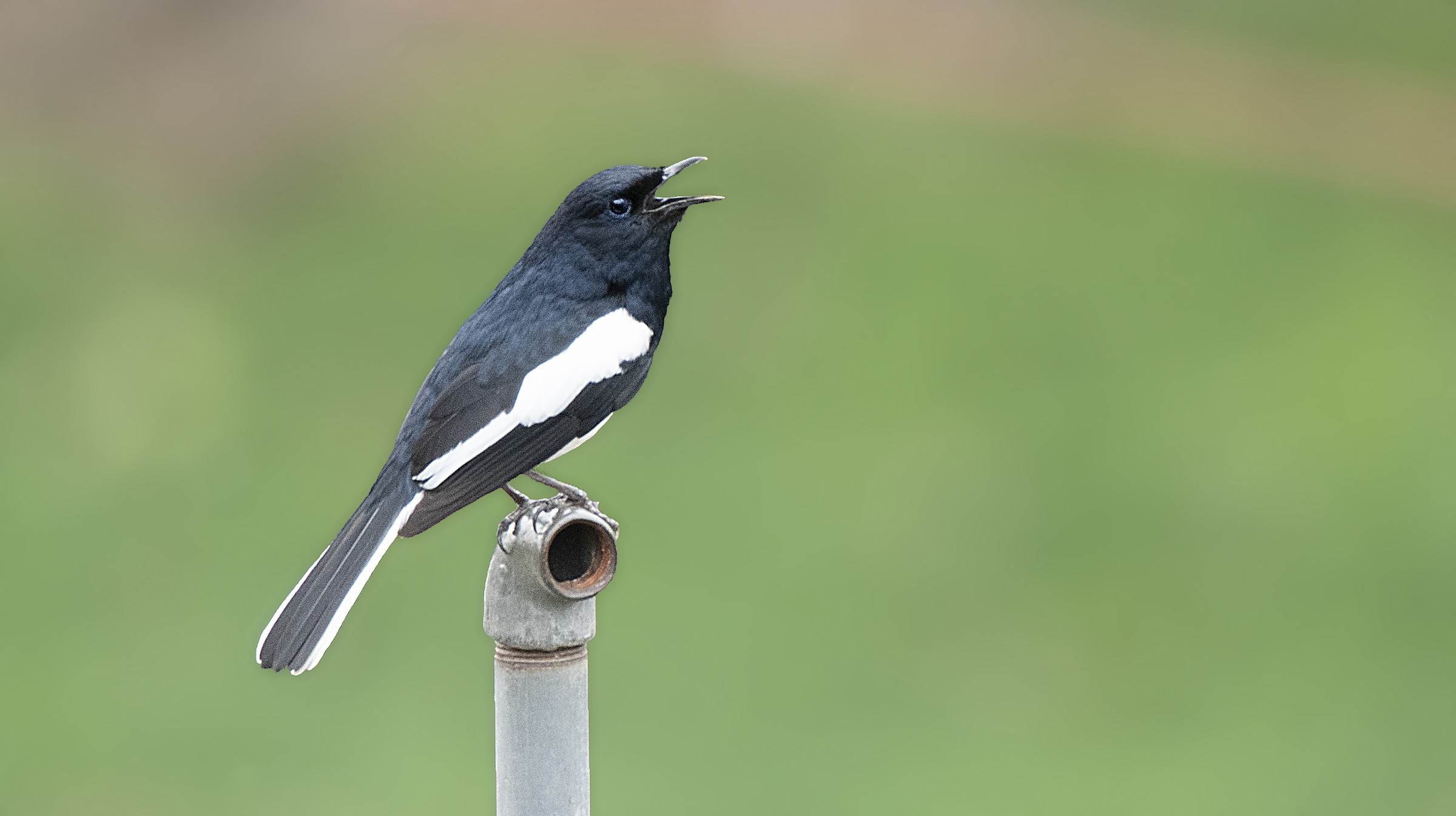 Lockdown Birding Challenge Results