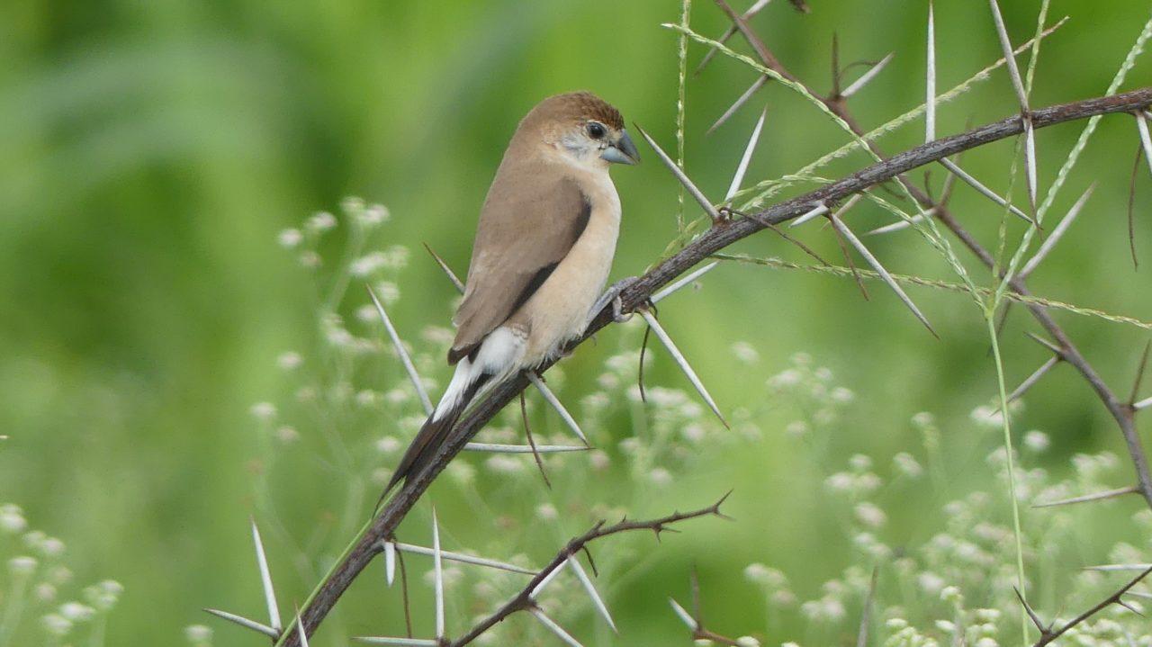 Birder Profile: Mukesh Dudhwe