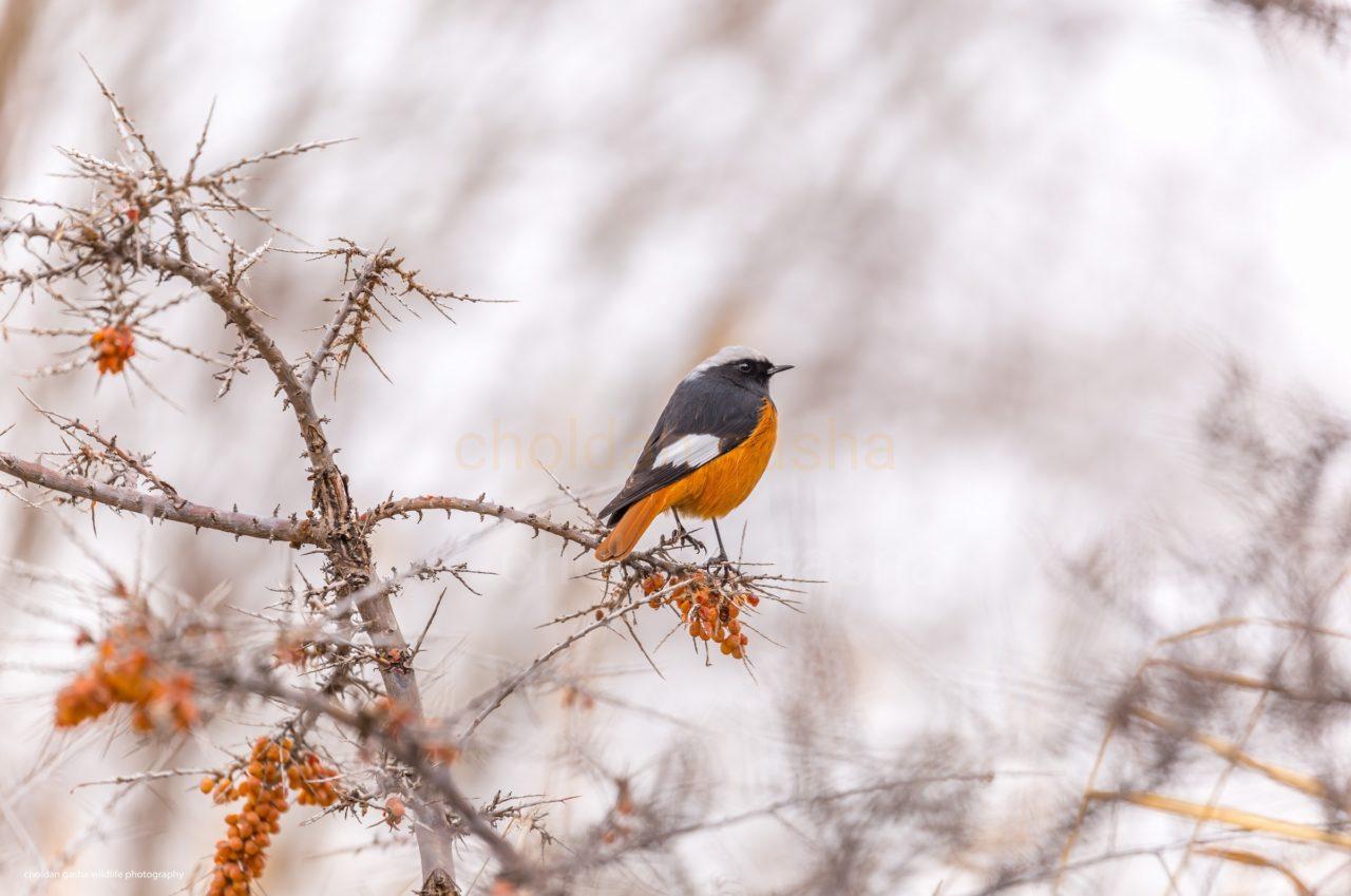 Birder Profile: Sonam Choldan Gasha