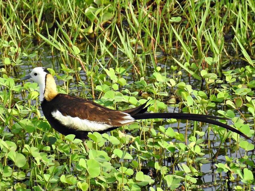 Birder Profile: Shilpa Gadgil
