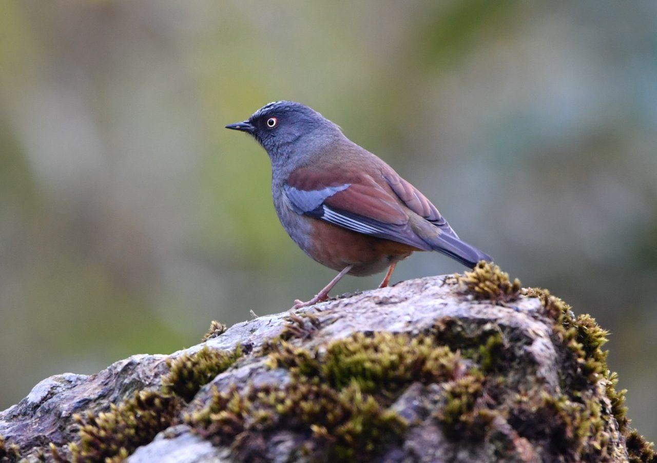 Wild Bird Day 2020