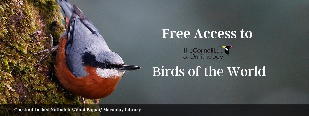 Birds of the World is now free for birders in India!