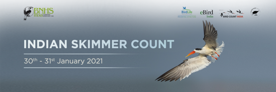 The Indian Skimmer Count