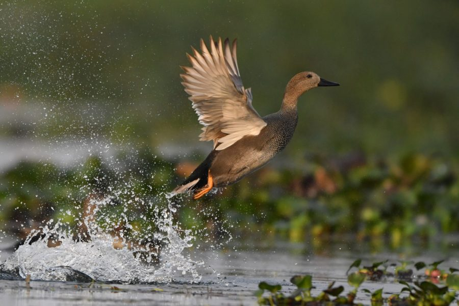 Bihu Bird Count 2021