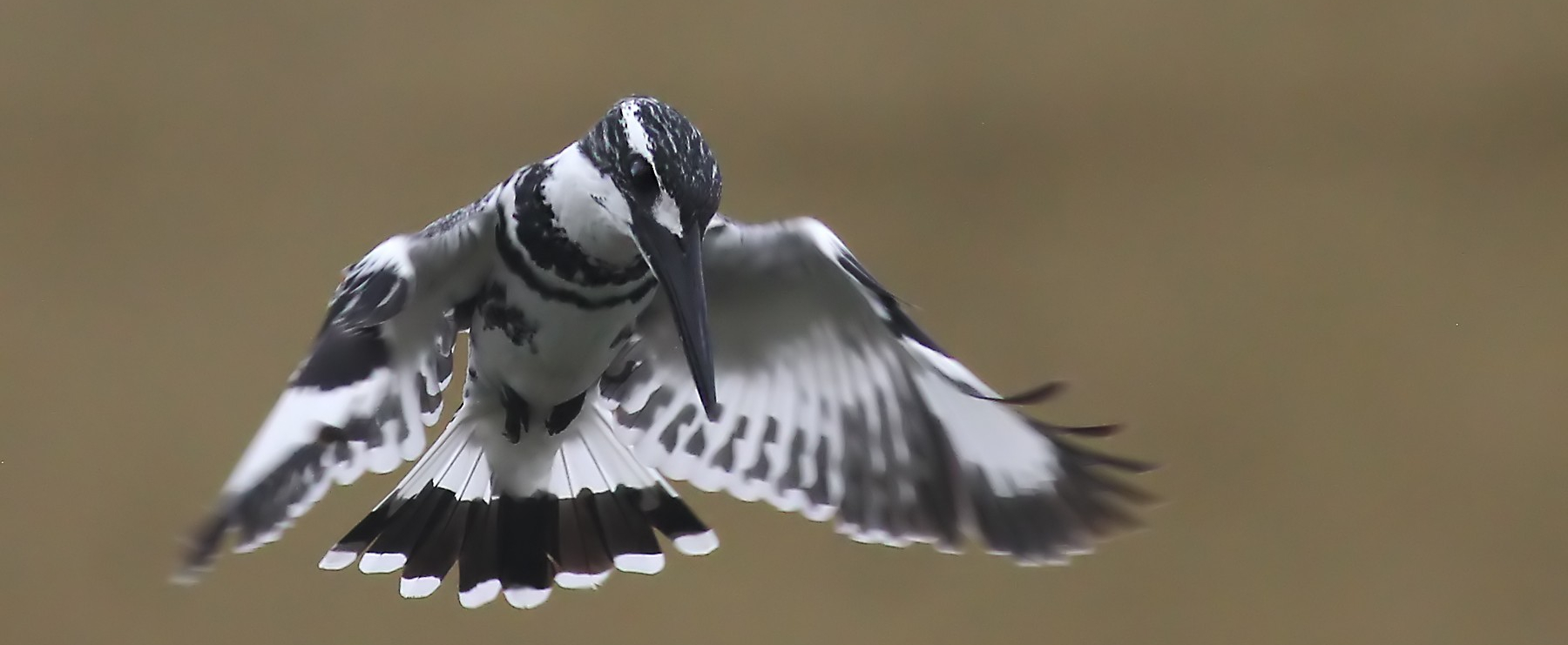 Pongal Bird Count 2021