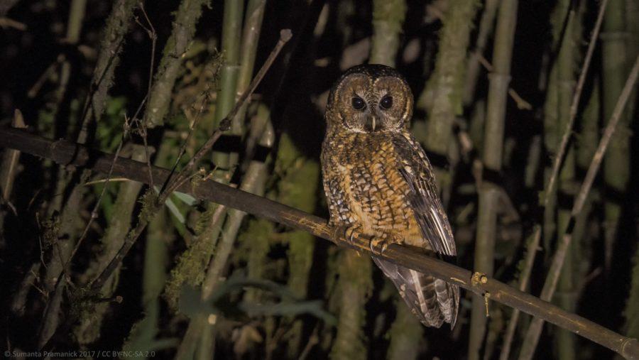 Birder Profile: Malyasri Bhattacharya