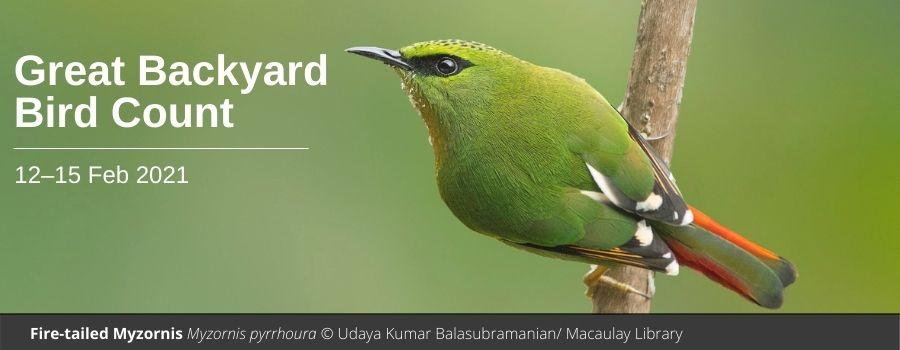 Great Backyard Bird Count 2021   Bird Count India