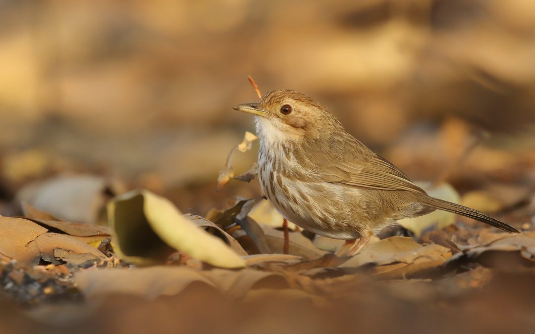 How to practice bird identification with digital tools