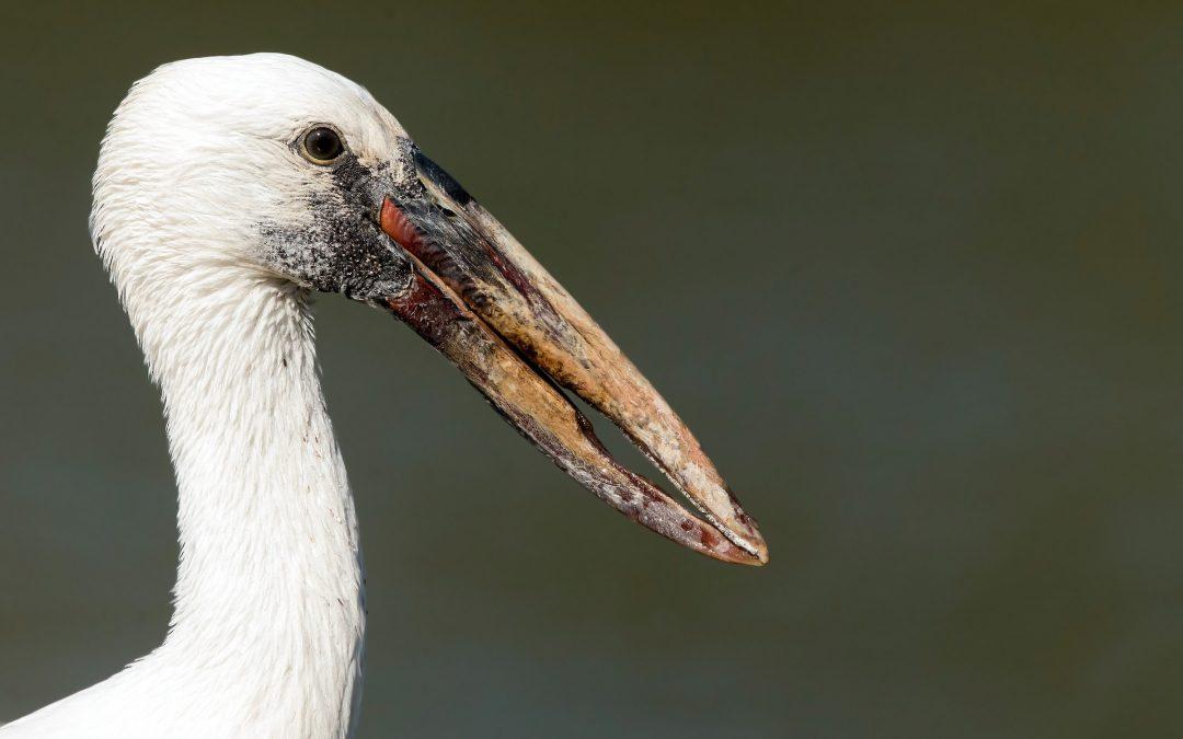 Birder Profile: Srinila Mahesh
